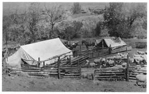 Sheep Shearing Camp